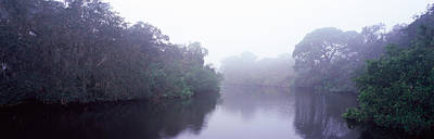 Oscar Scherer State Park Photograph - Early Morning Fog On A Creek, South by Panoramic Images
