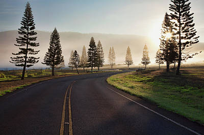 Pine Trees Photograph - Early Morning Fog On Manele Road by Jenna Szerlag