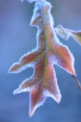 Photograph - Early Morning Frost 2013 by Maria Urso