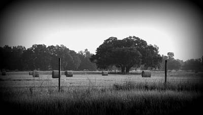 Photograph - Early Morning Hay Field 1 by Sheri McLeroy