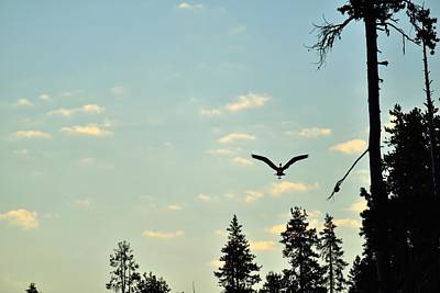 Photograph - Early Morning Heron In Silhouette by Rich Rauenzahn