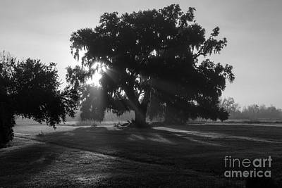 Early Morning Live Oak Original by Kelly Morvant
