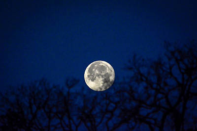 Photograph - Early Morning Moon by Shey Stitt