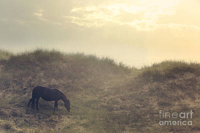 Glass Eyed Pony Photograph - Early Morning Munch by Lyndsey Warren