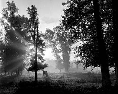 Early Morning Myst And A Horse Art Print by Wernher Krutein