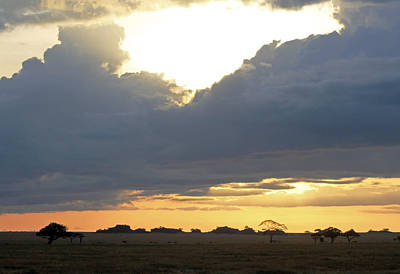 Photograph - Early Morning On The Serengeti by Tony Murtagh