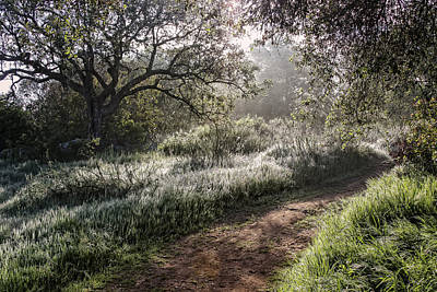Photograph - Early Morning Path by Dave Hall