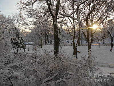 Early Morning Sun In Central Park.  Art Print