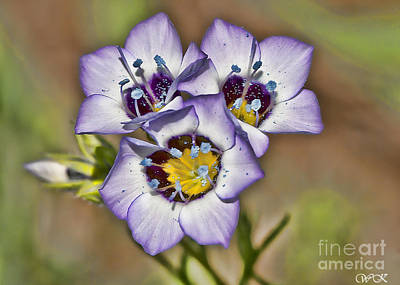 Photograph - Early Purples by Wanda Krack