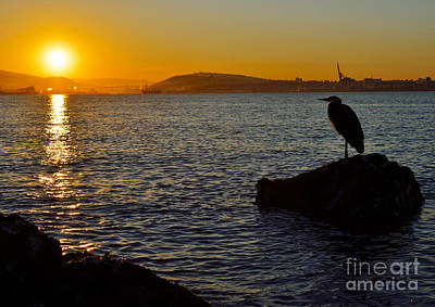 Photograph - Early Riser by Terry Elniski