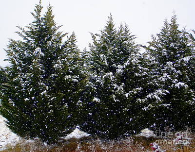 Photograph - Early Snow by Lew Davis