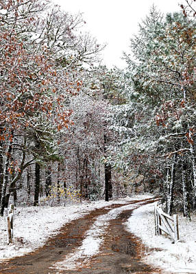 Photograph - Early Snow by Michelle Wiarda-Constantine
