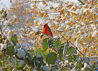 Photograph - Early Snow by Sandy Keeton