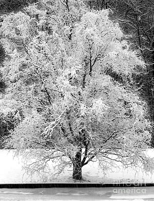 Photograph - Early Snow by Tom Brickhouse