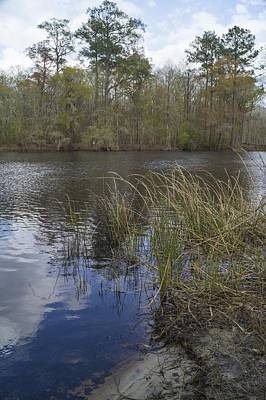 Photograph - Early Spring Along The Waccamaw River by MM Anderson