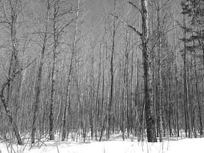 Photograph - Early Spring Northern Maine 3 by Gene Cyr