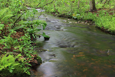 Photograph - Early Summer At Borden Brook by Andrew Pacheco