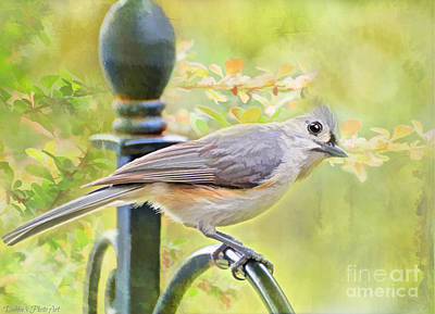 Tufted Titmouse Photograph - Early Summer Tufted Titmouse - Digital Paint I by Debbie Portwood