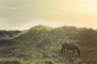 Glass Eyed Pony Photograph - Early Surise Dune Graze by Lyndsey Warren
