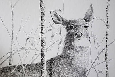 Drawing - Early Winters Whitetail by Wade Clark