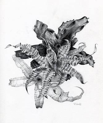 Terrarium Plant Drawing - Earth Stars by Penrith Goff