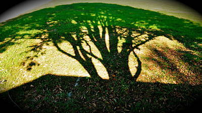 Photograph - Earth Tree by David Flitman