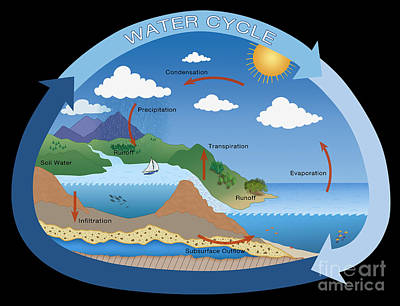 Info Graphic Photograph - Earths Water Cycle by Monica Schroeder
