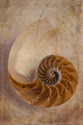 Seashell Fine Art Photograph - Earthy Nautilus Shell  by Garry Gay
