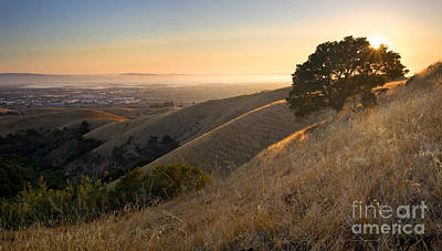 East Bay Hills In Summer Print by Matt Tilghman