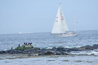 Photograph - East Coast Sailing  by Susan  McMenamin