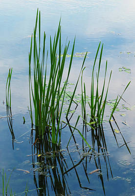 Photograph - East Harbor State Park - Marshland Grass by Shawna Rowe