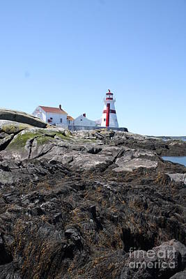 Animal Portraits - East Quoddy Lighthouse 3 by Joseph Marquis