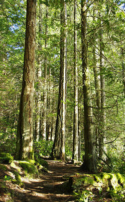 Photograph - East Sooke Park Trail by Marilyn Wilson