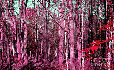 East Trail  Art Print by Tina M Wenger