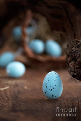 Easter Blue Eggs Print by Mythja  Photography