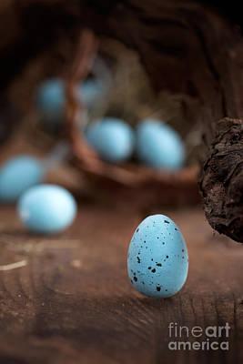 Mythja Photograph - Easter Blue Eggs by Mythja  Photography