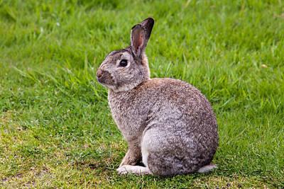 Photograph - Easter Bunny by John Ferrante