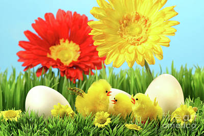 Photograph - Easter Chicks In The Grass  by Sandra Cunningham