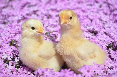 Easter Chicks Art Print by Kassia Ott