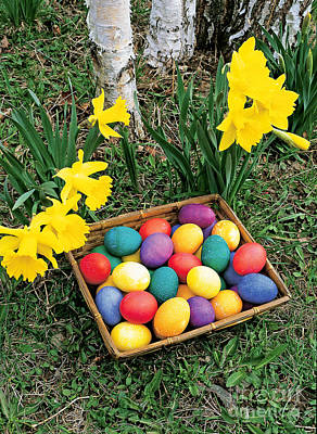 Easter Time Photograph - Easter Eggs And Daffodils by Michael P Gadomski