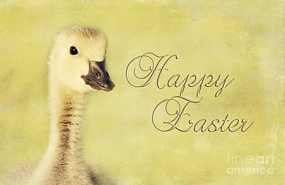 Photograph - Easter Gosling by Pam  Holdsworth