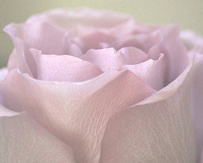 Lilac Photograph - Easter Lilac Rose by The Art Of Marilyn Ridoutt-Greene