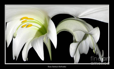 Photograph - Easter Lilies Abstract by Rose Santuci-Sofranko