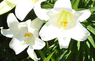 Photograph - Easter Lilies At Longue Vue by Katie Spicuzza