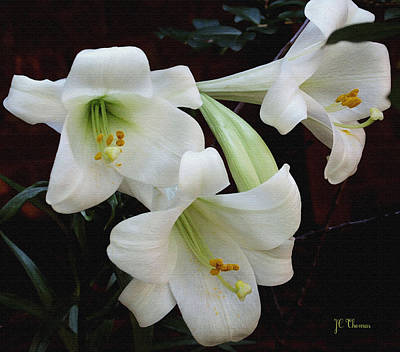 Photograph - Easter Lilies by James C Thomas