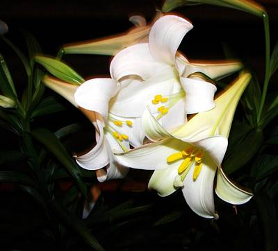 Photograph - Easter Lilies by Pamela Hyde Wilson