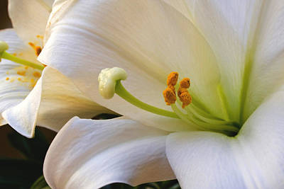 Art Print featuring the photograph Easter Lily by Bonnie Willis