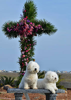 Photograph - Easter Puppies by Kathy Baccari