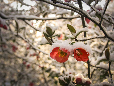 Photograph - Easter Snow Flowers by Jay Huron