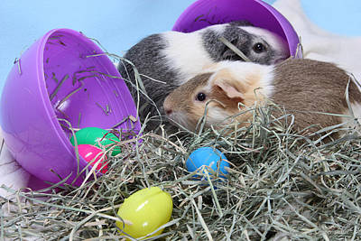 Photograph - Easter Surprise by Kimber  Butler